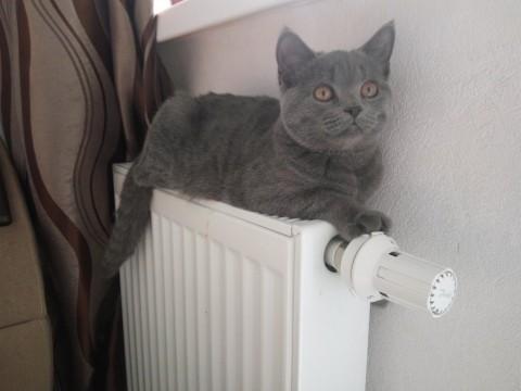 Когда в Екатеринбурге дадут тепло во все дома?